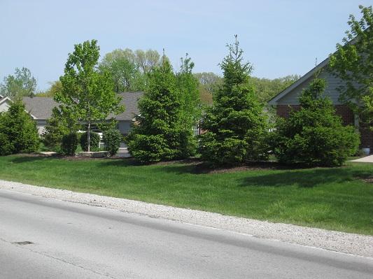 Condo Landscape